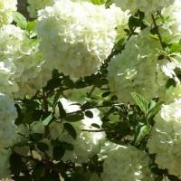 bloomsandpets005